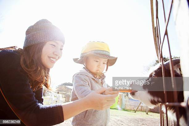 Mother and baby boy feeding a goat at farm