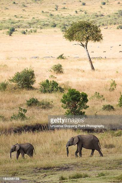 Mother and Baby Elephant in Savanna