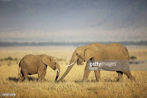 Mother and baby elephant in the field