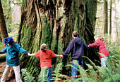 Mother and children (10-16) joining hands around giant redwood