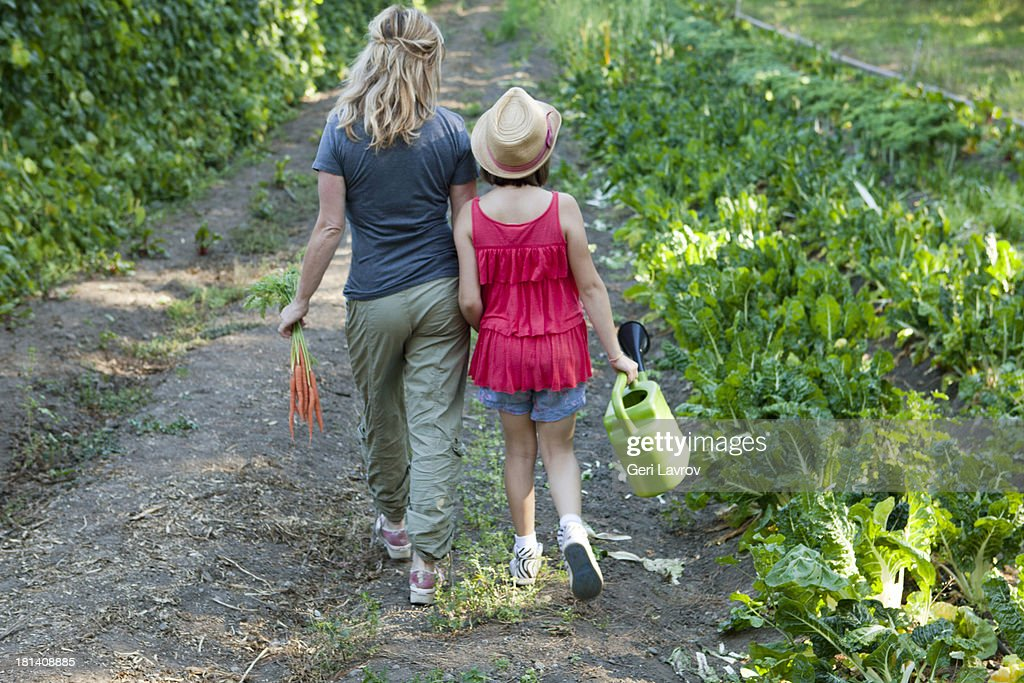 Mother and daughter harvesting vegetables : Stock Photo