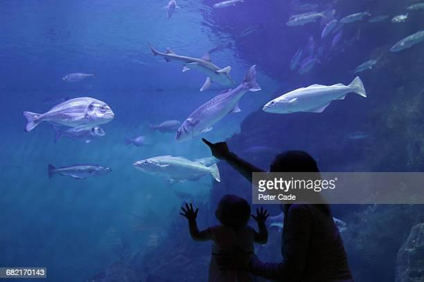 Mother and daughter looking at fish in aquarium