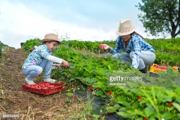 Mother and daughter on organic strawberry farm