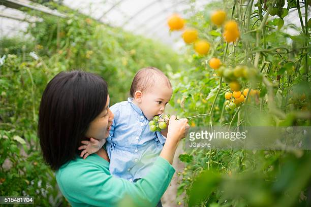 Mother and daughter picking tomatoes