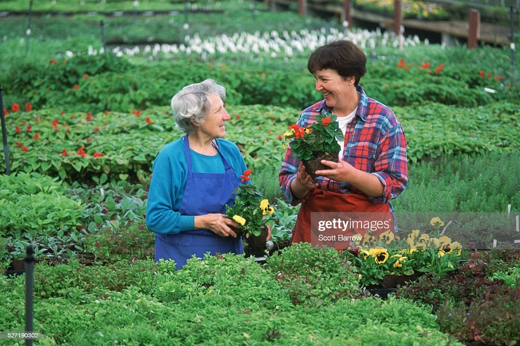 Mother and daughter working in a greenhouse : Stock Photo