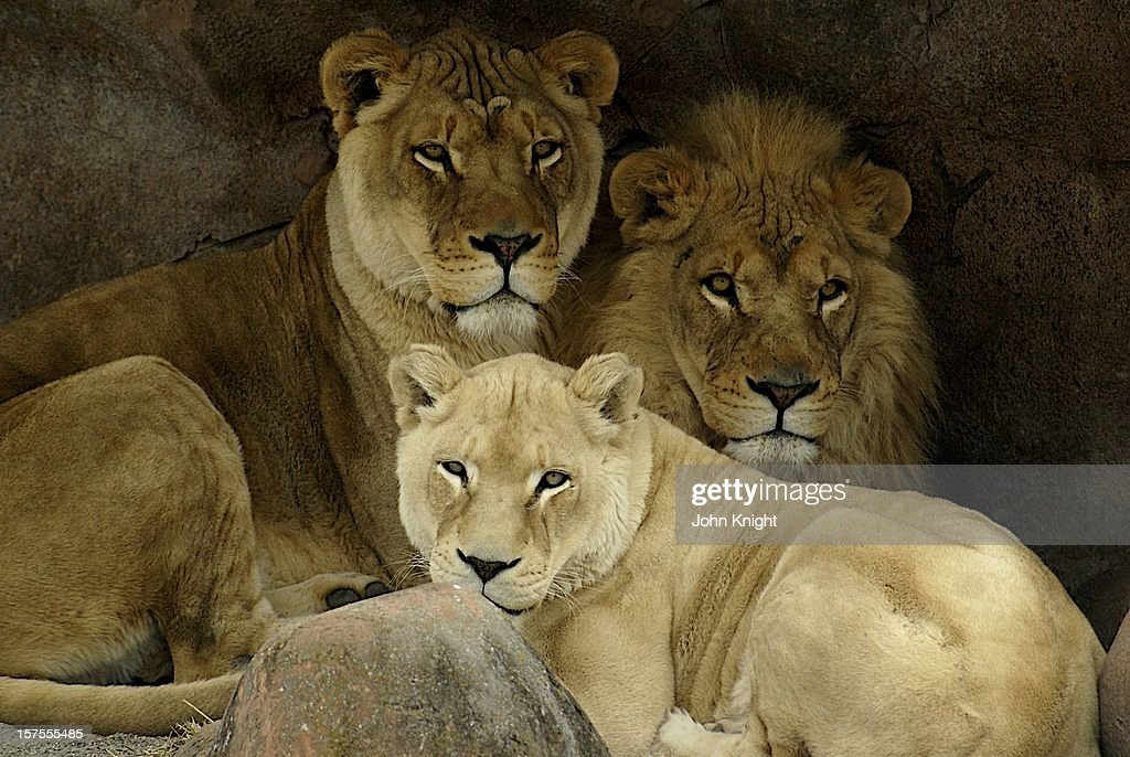 Mother and her sons : Stock Photo