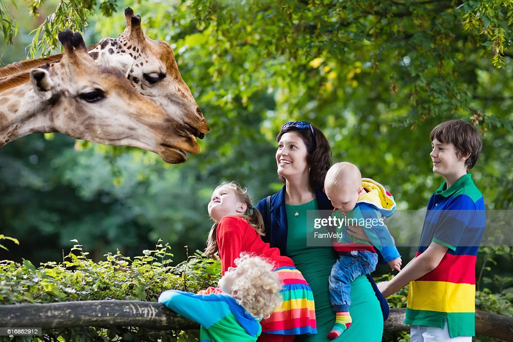 Mother and kids feeding giraffe : Stock Photo