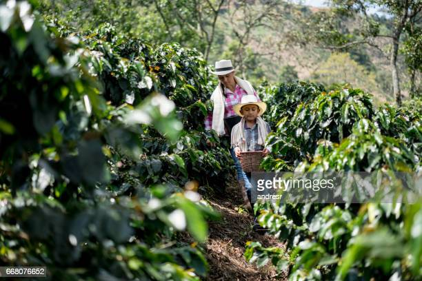 Mother and son collecting coffee beans at a farm