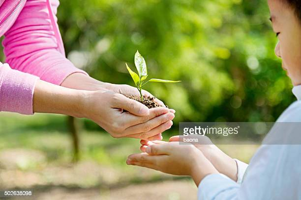 Mother and son hands holding new plant