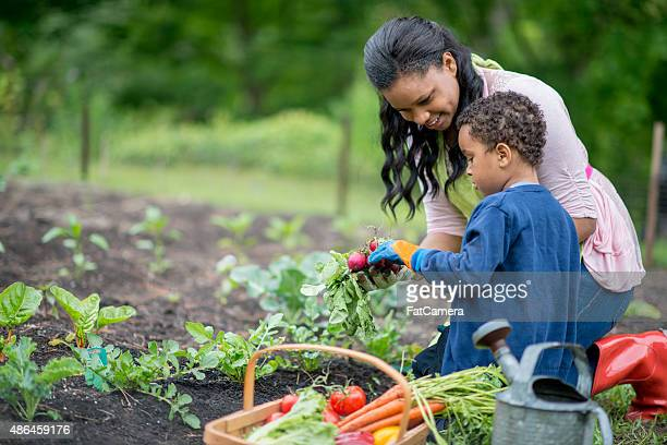 Mother and Son Harvesting Their Vegetable Garden