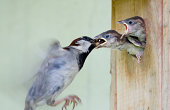 Mother bird feeding its babies