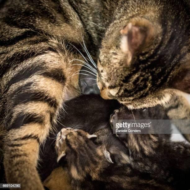 Mother cat with litter of newborn kittens