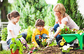 Mother, daughter and son planting flowers together