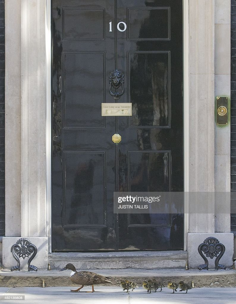A mother duck and her ducklings walk past the front door of Number 10 Downing Street in London on July 14, 2014.