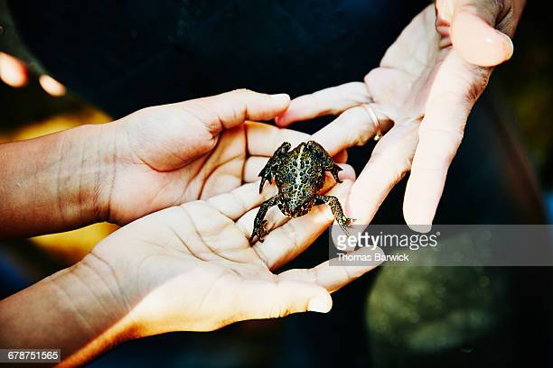 Mother handing frog to daughter on summer evening