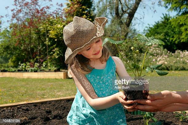 Mother handing girl strawberry plant