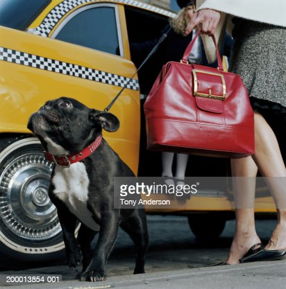 Mother helping daughter (4-6) out of taxi, dog standing on pavement : Stock Photo