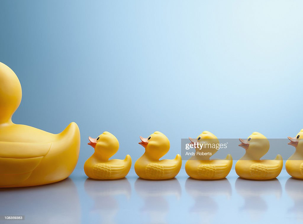 Mother rubber duck leading several rubber ducklings : Stock Photo