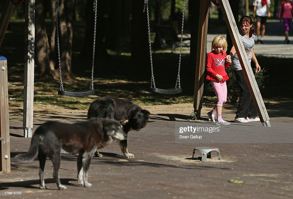 A mother urges her daughter away fom two stray dogs that were wandering acoss a playground on September 7, 2013 in Bucharest, Romania. Stray dogs are a common site in Bucharest and a pack of them recently mauled a 4-year-old boy in a park to death, prompting lawmakers to consider a new measure to euthanize the animals. While Romania's economic output has risen significantly since it joined the European Union in 2007, it still lags in infrastructure development and the fight against corruption.