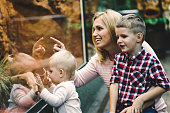 Mother with her kids looking at reptiles in zoo