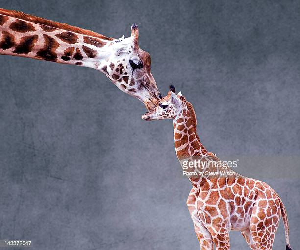 Mothers love on textured background