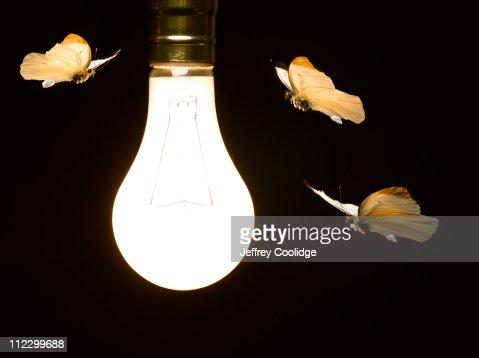 Moths Around Light Bulb Stock Photo | Getty Images:Moths around Light Bulb : Stock Photo,Lighting