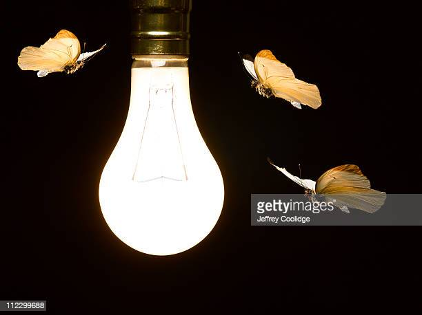 Moths around Light Bulb