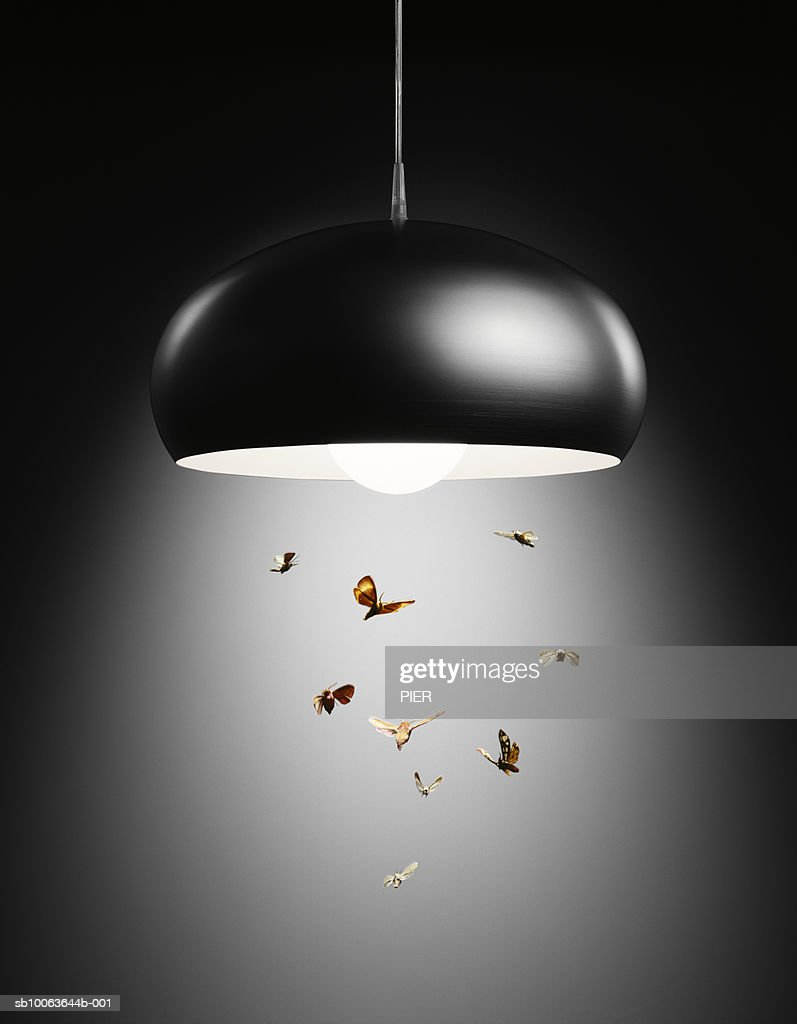 Moths flying in lamp light