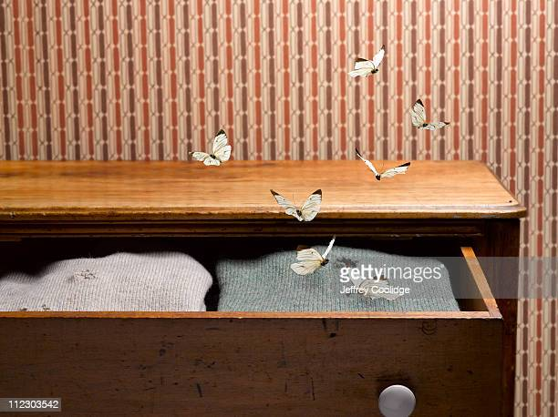 Moths in Sweater Drawer