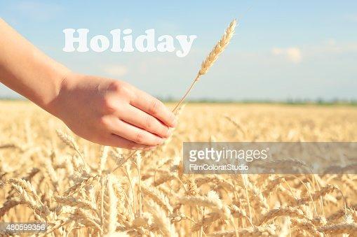 Motivational wheat field. : Stock Photo