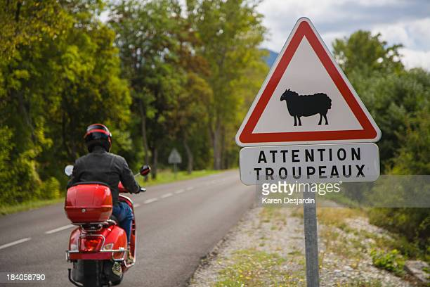 Motor scooter on road with sheep warning sign
