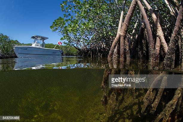 Motoring through the mangroves.