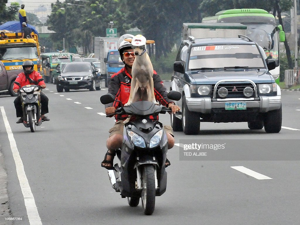 Motorist Gilbert rides on a motorcycle with his pet dog Bogie as they travel on a road in Manila on October 20, 2010.