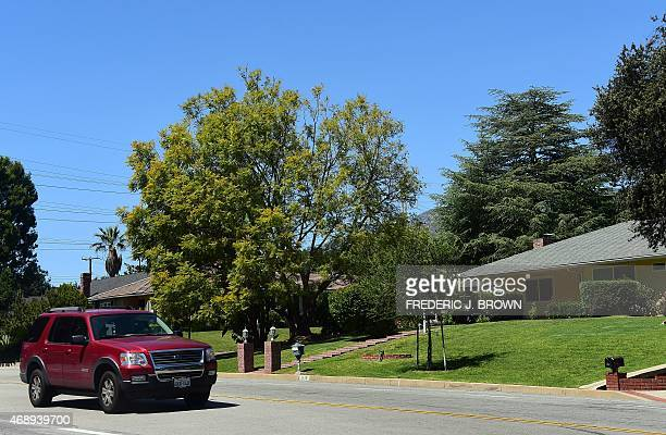 A motorist passes homes with manicured green grass lawns on April 8 2015 in La Canada Flintridge California on the foothills of the San Gabriel...
