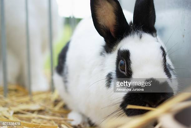 Mottled rabbit in a cage