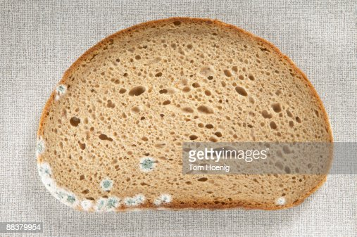 Slice of bread with mould, close-up