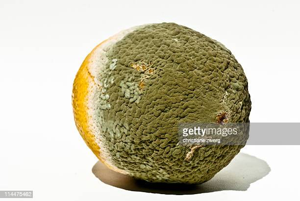 Mouldy fruit