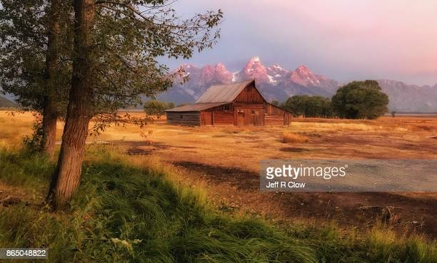 Moulton Barn Trees
