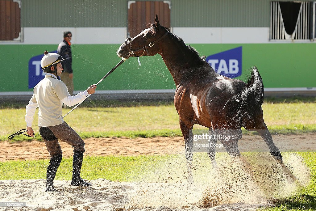 Mount Athos gets fired up with Allesandro Guerrini after a roll in the sand during trackwork ahead of the Melbourne Cup at Werribee Racecourse on November 4, 201 in Melbourne, Australia.