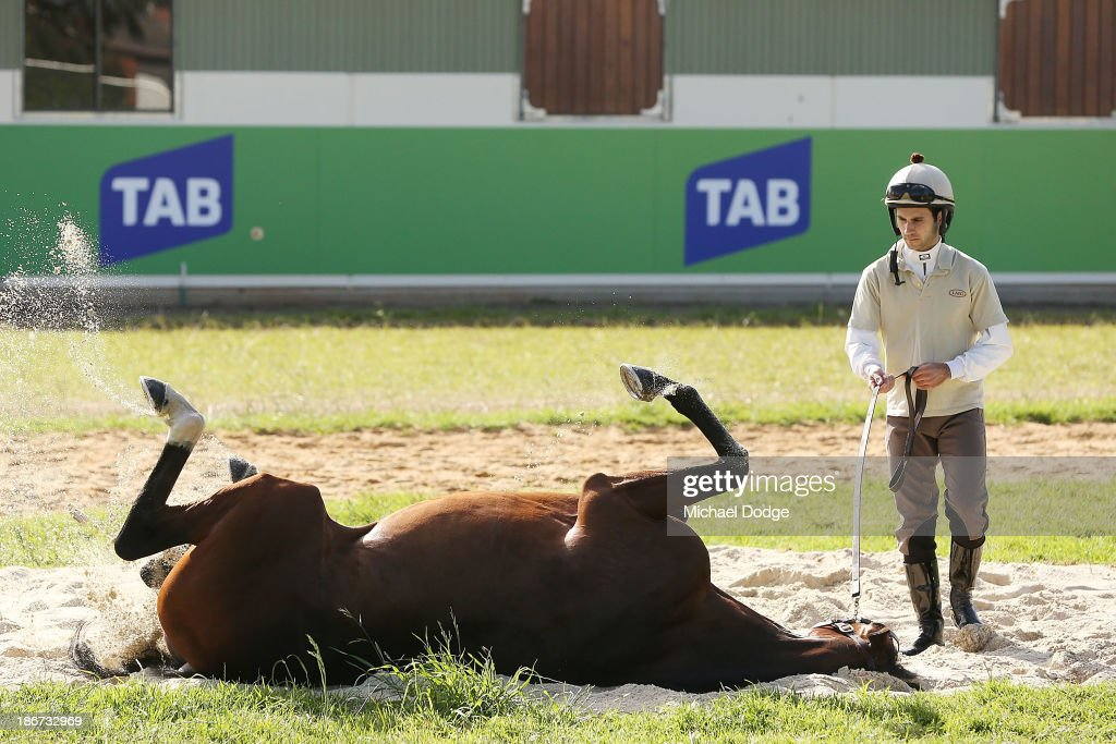 Mount Athos has a roll in the sand with Allesandro Guerrini during trackwork ahead of the Melbourne Cup at Werribee Racecourse on November 4, 201 in Melbourne, Australia.