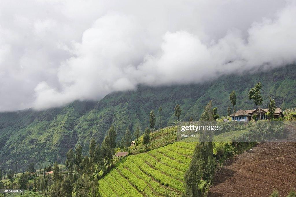 Mount Bromo Vegetable farms : Stock Photo