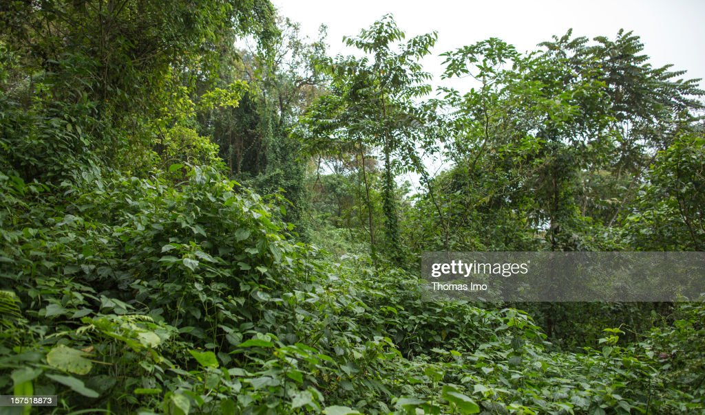Mount Cameroon National Park on October 31, 2012 in Buea, Cameroon.