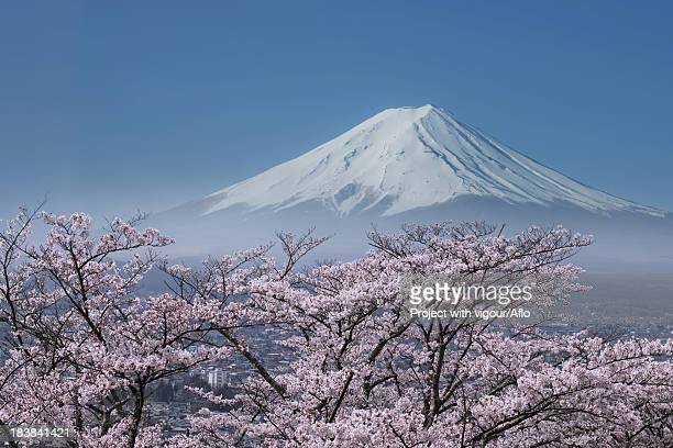 Mount Fuji and cherry blossoms