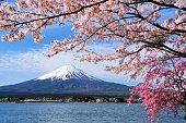 富士山と河口湖の桜