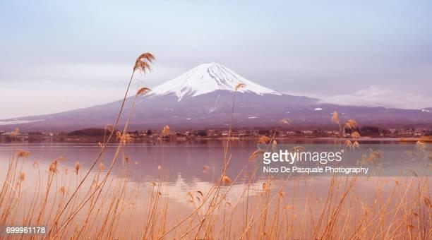 Mount Fuji at Lake kawaguchiko in Japan.