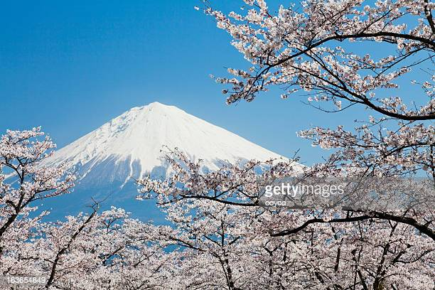 Mount Fuji & Cherry Blossoms