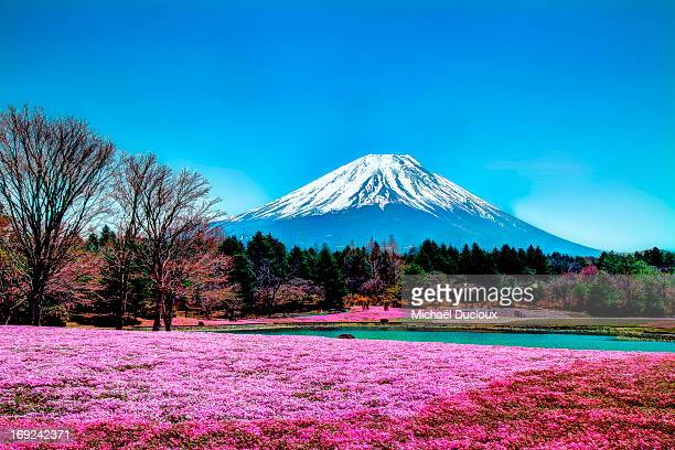 Mount Fuji in spring and blue sky landscape
