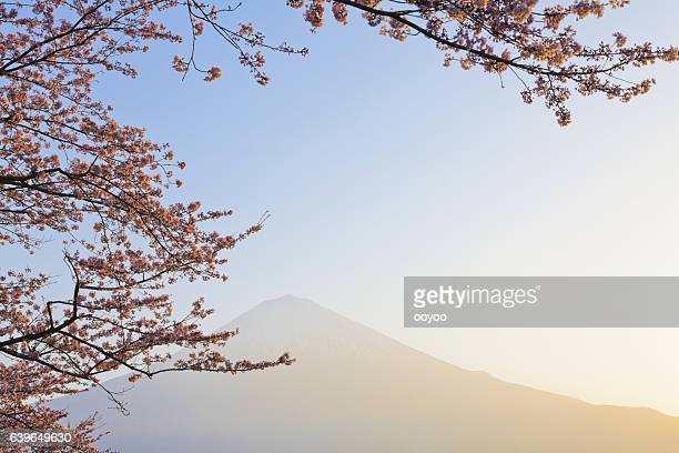 Mount Fuji Through Pink Cherry Blossom in the Morning