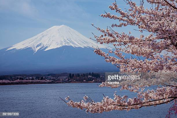 Mount Fuji with Sakura Hanami spring season