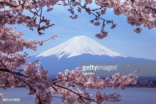 Mount Fuji with Sakura